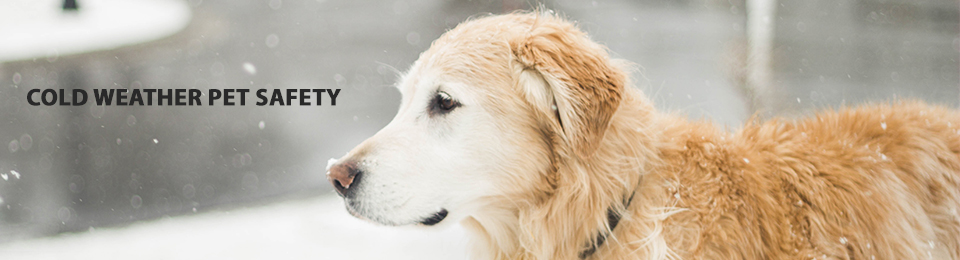 cold weather safety golden retreiver frey pet hospital