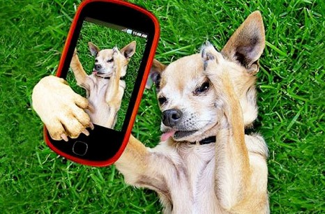 cell_phone_dog_275-780x3901