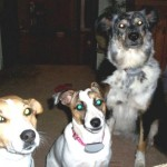 Gracie, Maggie & Lily (Amy's dogs)