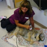 Laser Therapy (Kelly and her pet Petey)