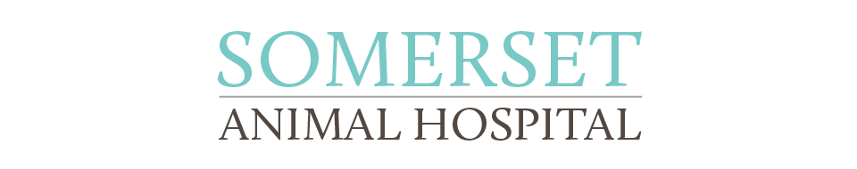 Logo for Somerset Animal Hospital Somerset, Kentucky