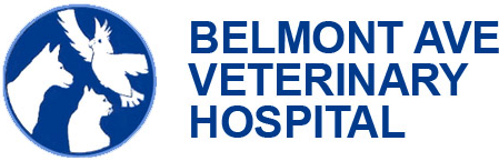 Belmont Avenue Veterinary Hospital