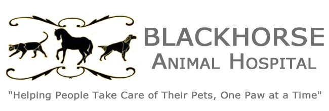 Blackhorse Animal Hospital