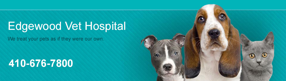 Logo for Veterinarians in Edgewood | Edgewood Veterinary Hospital