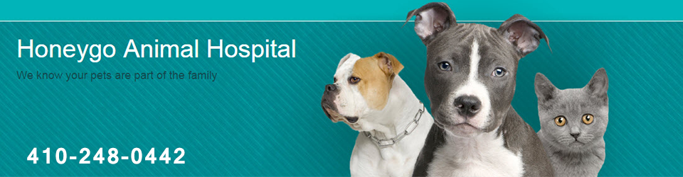 Logo for Veterinarians in White Marsh | Honeygo Animal Hospital