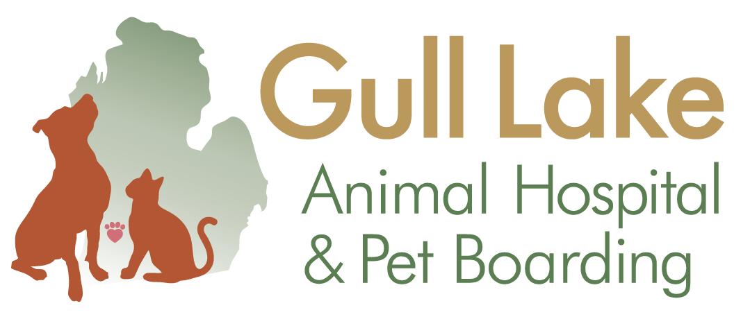 Veterinarians Richland Michigan | Gull Lake Animal Hospital