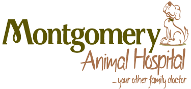 Veterinarians in Pineville, LA | Montgomery Animal Hospital
