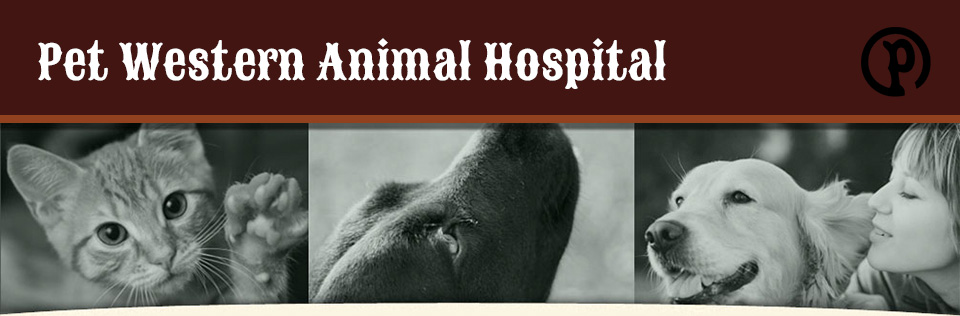 Logo for Veterinarians in Mineral Wells  | Pet Western Animal Hospital