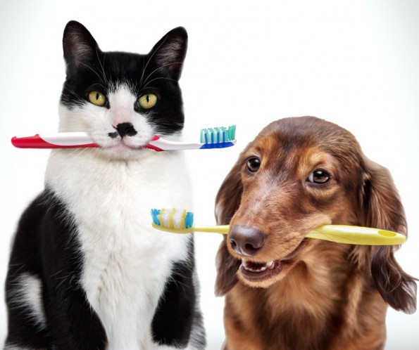 Pets Need Dentists Too