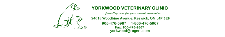 Logo for Veterinarians Keswick, ON | Yorkwood Veterinary Clinic